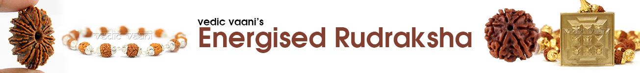 Energised Rudraksha