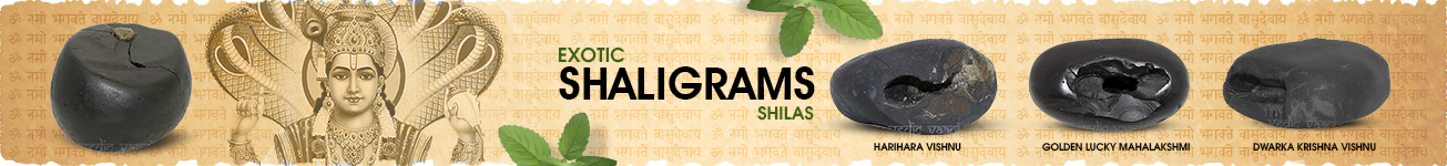 Exotic Shaligram Shilas